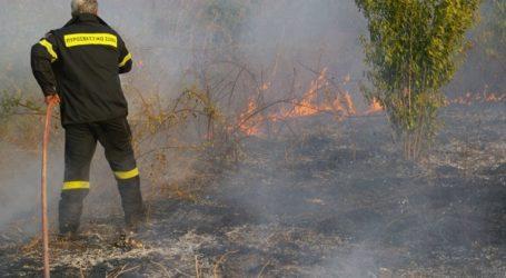 Πυρκαγιά σε δασική έκταση στη περιοχή Λογγιές