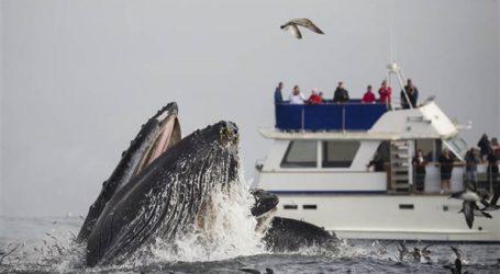 Φέρι συγκρούστηκε με φάλαινα-87 τραυματίες