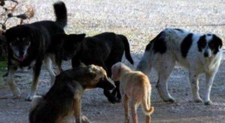 Μήνυση κατά του δήμου Κοζάνης για επιθέσεις από αδέσποτους σκύλους, κατέθεσε ο πρύτανης του ΤΕΙ