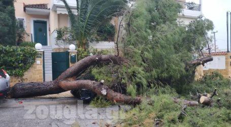 Δέντρο έπεσε πάνω σε ΙΧ στα Βριλήσσια