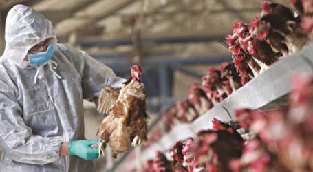 Εστία γρίπης των πτηνών εντόπισαν οι Αρχές στη Βουλγαρία