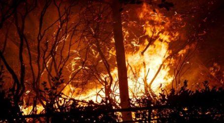 Συνελήφθησαν δύο άτομα για τη φωτιά που εκδηλώθηκε κοντά στο Αλιβέρι