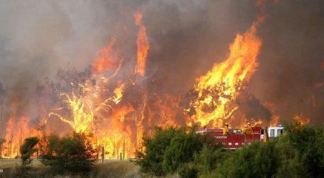 Πυρκαγιά στo Καλάμι Σπάρτης
