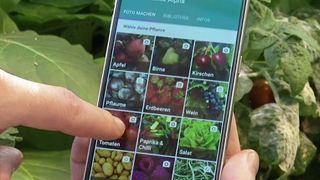 Στη Διαύγεια το Ειδικό Πρόγραμμα για τη δημιουργία νέων ποικιλιών φυτικών ειδών