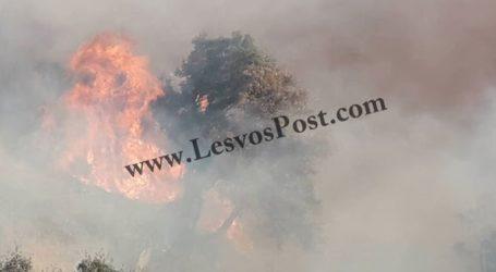 Μεγάλη φωτιά στο Μεγαλοχώρι Πλωμαρίου