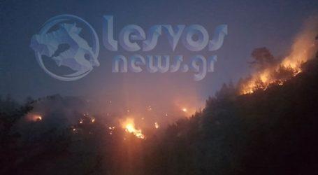Συνεχίζεται η μάχη με τις φλόγες στο Νεοχώρι Πλωμαρίου – Δεν κινδυνεύουν κατοικίες