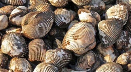 Διευκρινίσεις ΕΦΕΤ για κατάσχεση ακατάλληλων οστρακοειδών