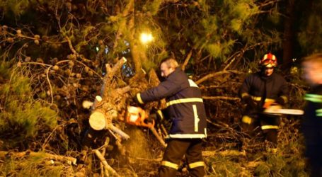 Έπεσαν δέντρα από τους ισχυρούς ανέμους σε Αγριά, Βόλο και Λεχώνια