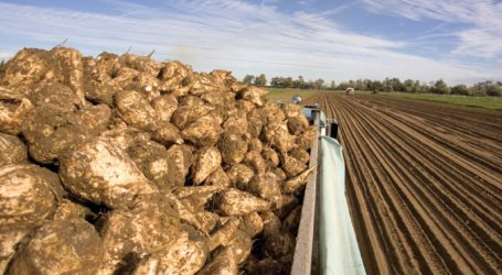 Μαγνησία: Ανάρτηση καταστάσεων πληρωμής για την παραγωγή σακχαρότευτλων