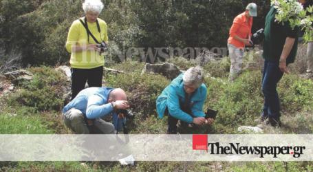 Ολλανδοί τουρίστες ήρθαν στο Πήλιο για να δούνε τις… ορχιδέες! [εικόνες]
