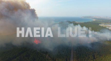 Μεγάλη πυρκαγιά στο δάσος του Κουνουπελίου