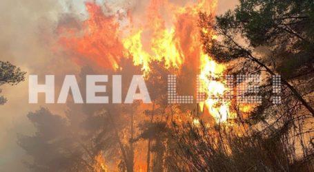 Εναέρια μέσα και ισχυρές επίγειες δυνάμεις της Πυροσβεστικής επιχειρούν στη Στροφυλιά