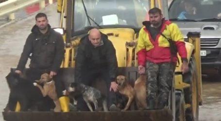 Οι πυροσβέστες έσωσαν και ζώα από την κακοκαιρία