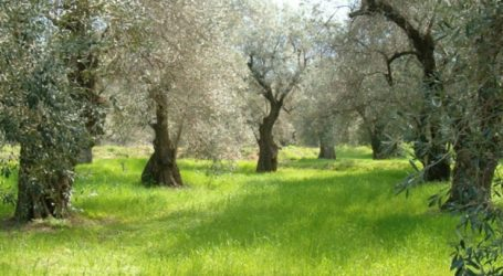 Συνολικά 3.677 αιτήσεις εντάχθηκαν στο Μέτρο των Βιολογικών Καλλιεργειών