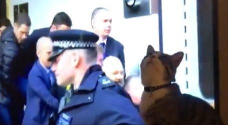Ασφαλής ο γάτος του Ασάνζ διαβεβαιώνει το WikiLeaks
