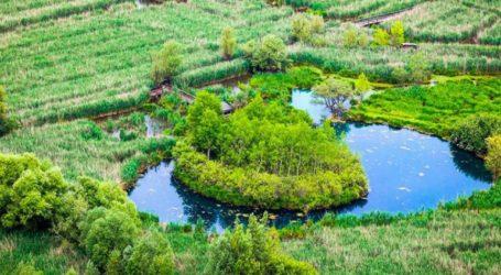Πλωτά νησάκια γεμάτα βλάστηση
