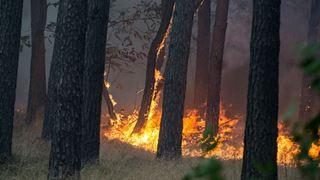 Οι πρώτες δασικές πυρκαγιές αναζωπυρώνουν τους φόβους για ένα θερμό καλοκαίρι