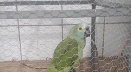 Βραζιλία: Συνελήφθη «μαφιόζος»… παπαγάλος