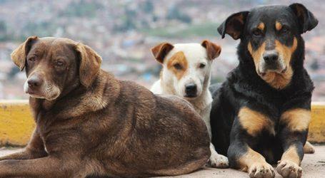 Βόλος: Σύσκεψη για τα αδέσποτα ζώα στην Περιφέρεια Θεσσαλίας