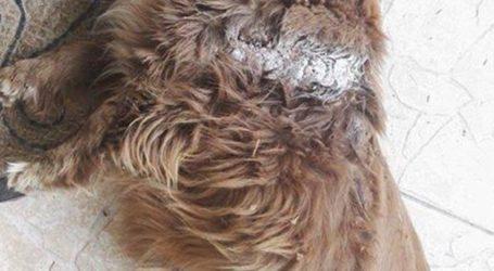 Αποτροπιασμός: Σκότωσαν αδέσποτο με αλυσοπρίονο στο Αργυροπούλι Λάρισας (σκληρές φωτο)