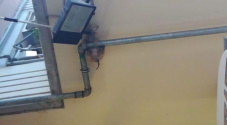 «Στο πόδι» η Πυροσβεστική στη Λάρισα για ένα …συμπαθέστατο γατάκι (φωτο)