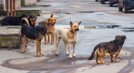 Αδέσποτα σκυλιά επιτέθηκαν σε 10χρονο κορίτσι στην Αγριά Βόλου