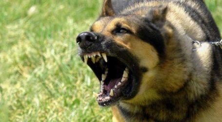 Σκύλος δάγκωσε γυναίκα στις Νέες Καρυές
