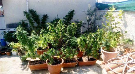 Βόλος: Καλλιεργούσε κάνναβη στο σπίτι του στη Νέα Ιωνία