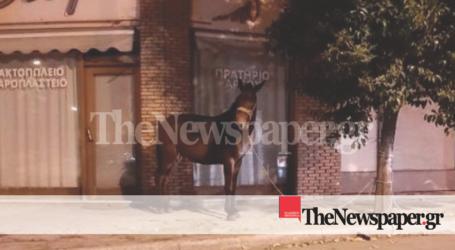 ΤΩΡΑ: Νυχτερινή βόλτα αλόγου στους δρόμους του Βόλου – Κινητοποίηση των Αρχών [αποκλειστικές εικόνες]