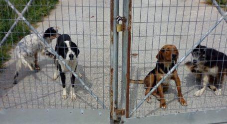 «Μαζί για τον Βόλο»: Δεν θα επιτρέψουμε αυτό το αίσχος στο καταφύγιο αδέσποτων ζώων