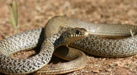 Λαχτάρησαν Βολιώτες χθες το βράδυ – Φίδι εισέβαλε στο σπίτι τους