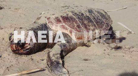 Νεκρές χελώνες καρέτα – καρέτα στο Κατάκολο