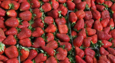 Δέσμευση φράουλας χωρίς ταυτότητα στον Πειραιά
