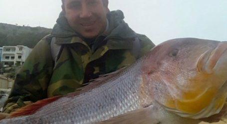 Συναγρίδα 15,5 κιλών έπιασε ψαράς στη Χίο