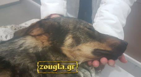 Άνδρας πυροβόλησε τον σκύλο του και συνελήφθη