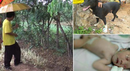Ανάπηρος σκύλος έσωσε νεογέννητο που το έθαψαν ζωντανό σε χωράφι