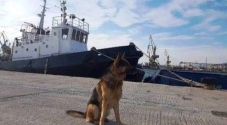 Ταξίδευε με μισό κιλό χασίς – Τον εντόπισε αστυνομικός σκύλος
