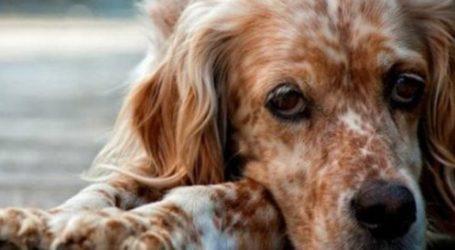Βόλος: Έριξαν φόλες σε πάρκο της Νέας Ιωνίας – Τι να προσέχουν οι ιδιοκτήτες σκύλων