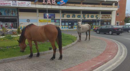 Βόλος: Δύο άλογα στον κυκλικό κόμβο του ΚΤΕΛ [εικόνες]
