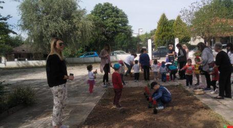 Λιλιπούτειοι φύτεψαν δεκάδες φυτά κι έδωσαν ζωή στο προαύλιο του παιδικού σταθμού Ριζομύλου