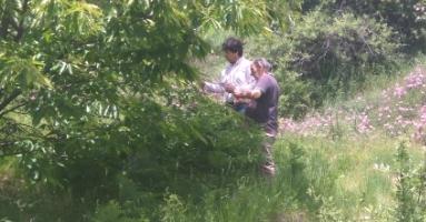 Καταπολέμηση της σφήκας της καστανιάς στο δήμο Τεμπών