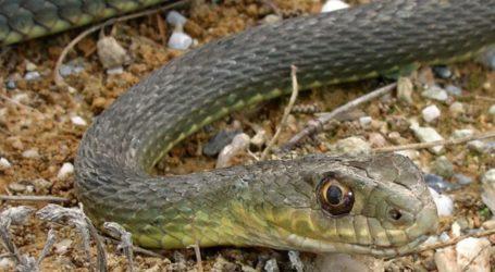 Δύο φίδια στον Βόλο αναστάτωσαν την Πυροσβεστική υπηρεσία