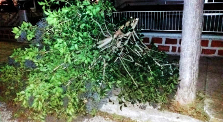 Έπεσε δέντρο στην οδό Μικρασιατών στον Βόλο
