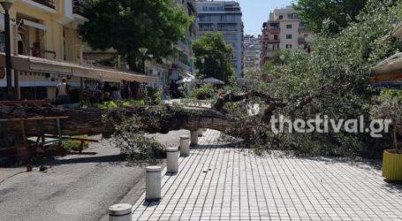 Πτώση δέντρου στο κέντρο της Θεσσαλονίκης