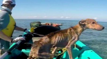 Βρήκε σκύλο – ναυαγό στη μέση του Ατλαντικού και τον έσωσε