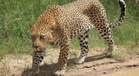 Λεοπάρδαλη σκότωσε ένα 2χρονο αγοράκι σε εθνικό πάρκο