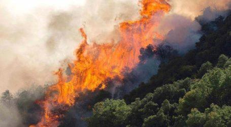 Μεγάλη φωτιά σε δάσος της Δυτικής Αχαΐας