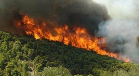 Πυρκαγιά σε δασική έκταση στους Αγίους Θεοδώρους