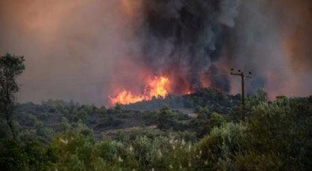 Πυρκαγιά σε δάσος στον Πισσώνα Ευβοίας