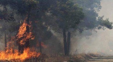 Αυλώνα: Νεκρός εντοπίστηκε σε πυρκαγιά